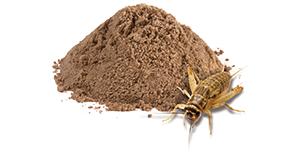 cricket-flour
